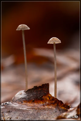 Paddenstoelen / Mushrooms